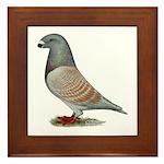 American Show Racer Opal Pigeon Framed Tile