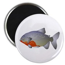 "Red Belly Piranha 2.25"" Magnet (10 pack)"