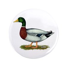 "Mallard Duck Drake 3.5"" Button (100 pack)"