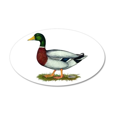 Mallard Duck Drake 35x21 Oval Wall Decal