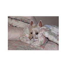 Westie Rectangle Magnet 3
