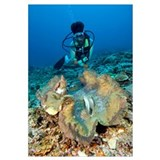 Diver and a giant clam