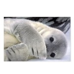 Seal Pup Antarctica Postcards (Package of 8)