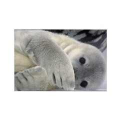 Seal Pup Antarctica Rectangle Magnet