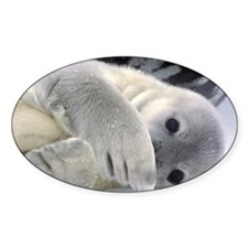 Seal Pup Antarctica Oval Decal