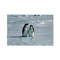 Penguin Pair Rectangle Magnet (10 pack)