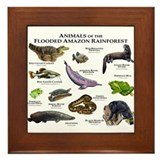 Animals of the Flooded Amazon Rainforest Framed Ti