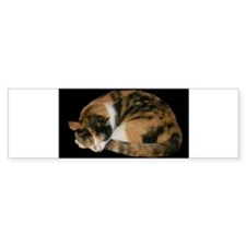 Calico Napper Bumper Sticker