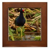 Purple Gallinule Framed Tile