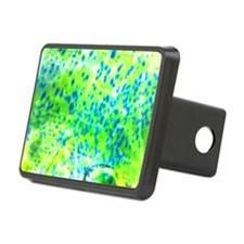 Mahi Mahi / Dolphin Fish - Rectangular Hitch Cover