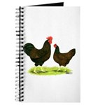 Barnevelder Chickens Journal