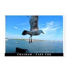 Seagull at Chatham Harbor Postcards (Pck of 8)