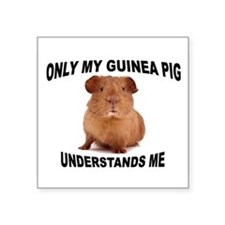 "guinea pig Square Sticker 3"" x 3"""