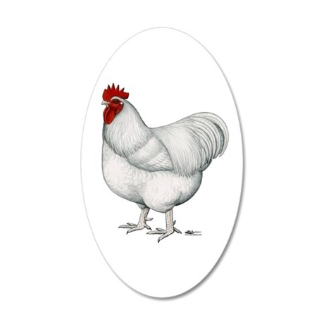 Orpington White Rooster 20x12 Oval Wall Decal