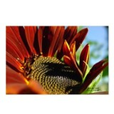 8 Single Design Sunflower Postcards