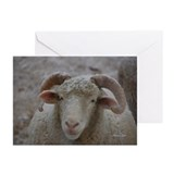 Blank Snowcovered Ewe Cards (Pk of 10)