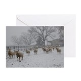 Blank Wintery Snow Sheep Greeting Cards (Pk of 10)