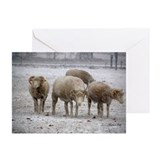 Blank Four Ewes in Snowshower Cards (Pk of 10)