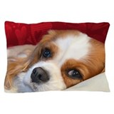 Cavalier King Charles SpanielPillow Case