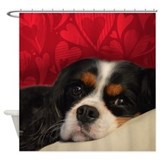Cavalier king charles spaniel Shower Curtains