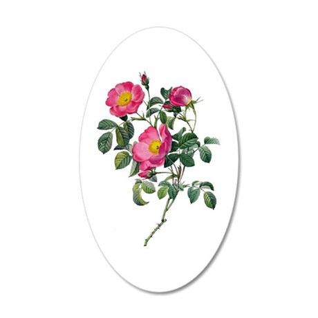 Pierre-Joseph Redoute Rose 35x21 Oval Wall Decal