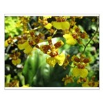 .yellow oncidium. Small Poster