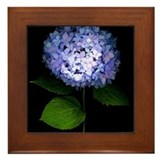 Blue Hydrangea Tile Framed Tile