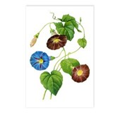 Pierre-Joseph Redoute Botanical Postcards (Package