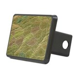 Fish skin, SEM - Hitch Cover