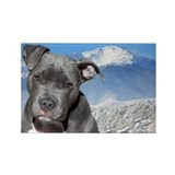 Blue American Pit Bull Terrier Puppy Dog Rectangle