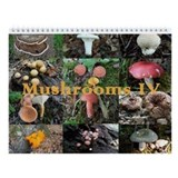 Eastern North America Mushrooms 4