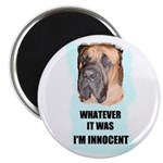 WHAT EVER IT WAS I'M INNOCENT Magnet
