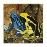 Multi Colored Poison Dart Frogs Tile Coaster