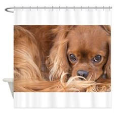 Sweet Friend King Charles Spaniel Shower Curtain