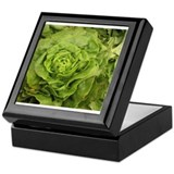 romantic ruffly lettuce Keepsake Box