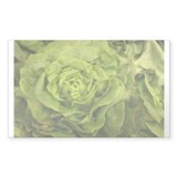 romantic ruffly lettuce Decal