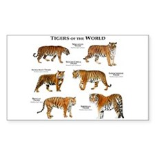 Tigers of the World Decal