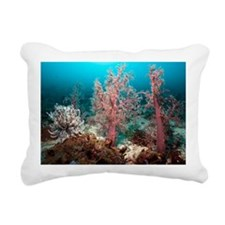 Soft corals - Pillow