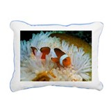 False clown anemone fish - Pillow
