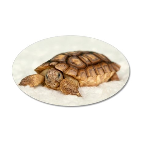 Tortoise Time! 35x21 Oval Wall Decal