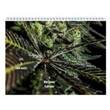 2013 Wall Calendar - Marijuana Plants