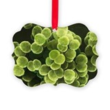 Staphylococcus bacteria, SEM - Ornament