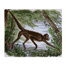 Spider monkey, historical artwork - Stadium Blank