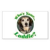 Who's your Laddie? Decal