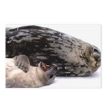 Seal mother and pup - Antarctica Postcards (Packag