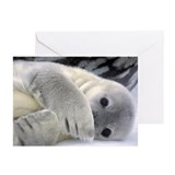 Seal Pup Antarctica Greeting Cards (Pk of 10)