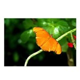 Arubian Butterfly - 1 (Postcards, 8pk)