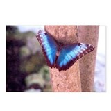 "Postcards (Package of 8) ""Butterfly 3"""