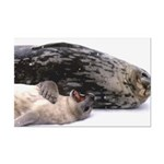 Seal mother and pup - Antarctica Mini Poster Print