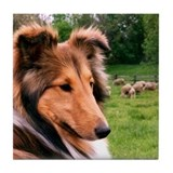 (1) Sheltie & Sheep Coaster